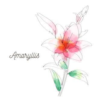 Peinture de fleurs d'amaryllis sur fond blanc