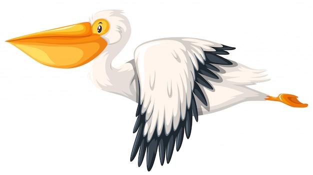 Pélican volant à fond blanc