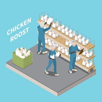 Perchoir de poulet dans une ferme avicole avec le personnel inspectant et assis des poules pondeuses illustration isométrique