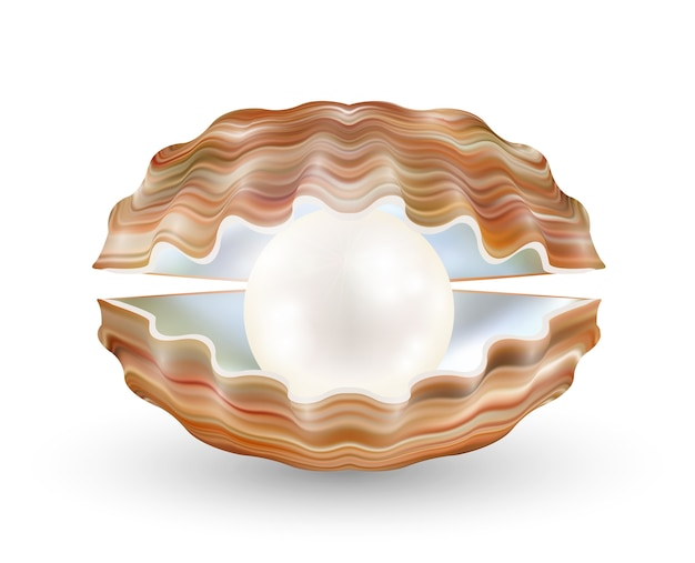 Perle brillante dans une coquille de mer ouverte