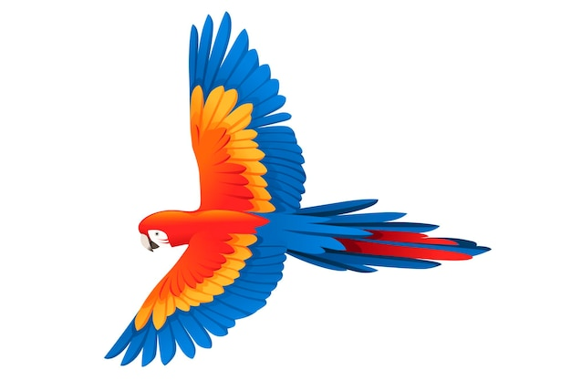 Perroquet adulte d'ara rouge et vert volant (ara chloropterus) dessin animé oiseau design plat vector illustration isolé sur fond blanc.