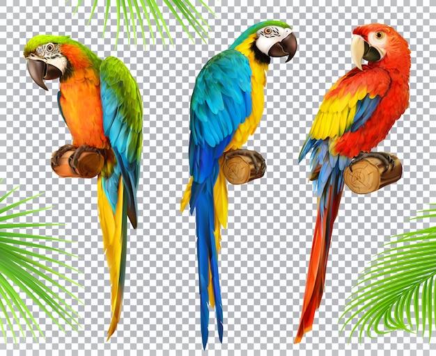 Perroquet ara. ara. jeu d'icônes photo réaliste 3d