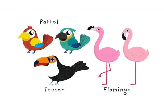 Perroquet mignon, toucan, vecteur de dessin animé de flamant rose.