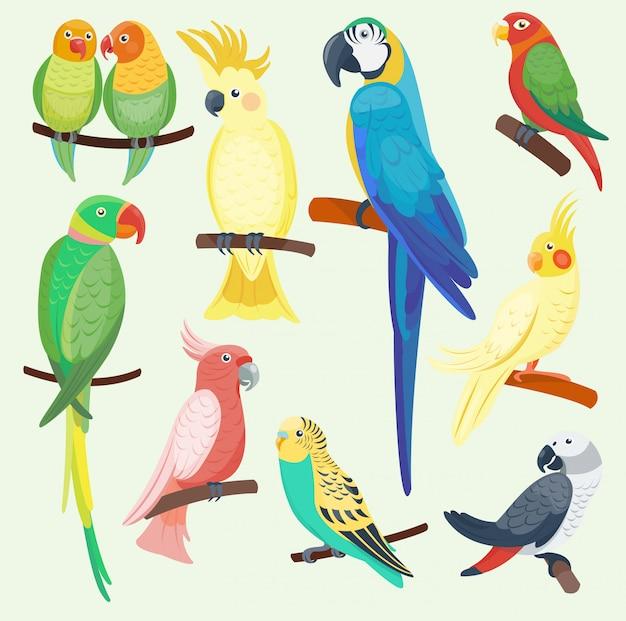 Perroquets exotiques de dessin animé mis illustration animaux sauvages oiseaux zoo faune tropicale ara isolé
