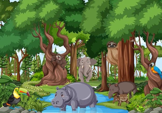 Personnage de dessin animé d'animaux sauvages dans la scène de la forêt