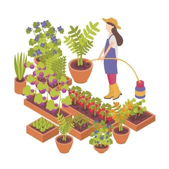 Personnage de dessin animé féminin arrosant des baies, des plantes potagères poussant dans des pots et des jardinières sur fond blanc.