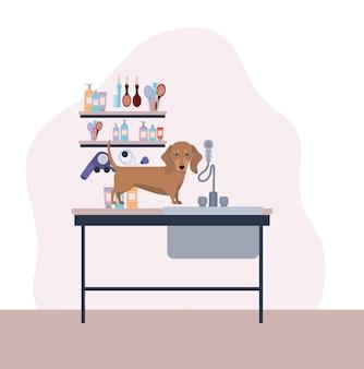 Personnage mignon d'animal chien dashhund
