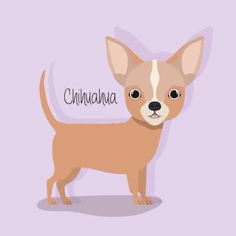 Personnage mignon d'animal de compagnie de chien de chihuahua