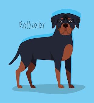 Personnage mignon d'animal de compagnie de chien rottweiler