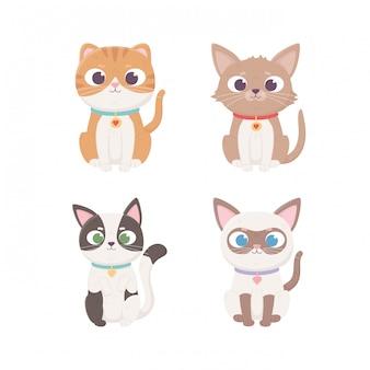Personnage de petit chat assis avec une race différente, animaux de compagnie