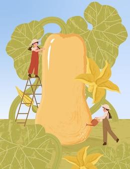 Personnages de dessins animés d'agriculteurs avec récolte de plantes de courge musquée dans des illustrations d'affiches de ferme