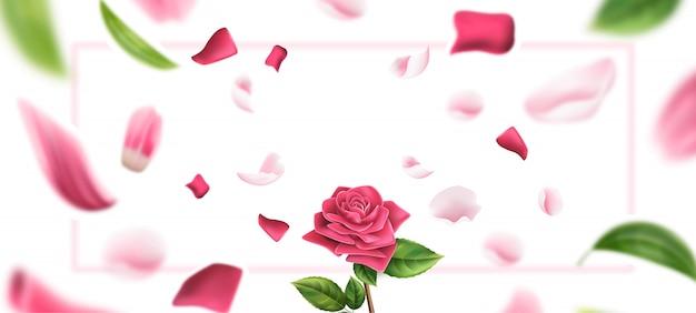 Pétale de rose floue, fond de feuilles