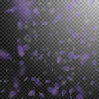 Pétales de fleurs violettes tombant. fleurs romantiques pittoresques qui tombent de la pluie. pétale volant sur fond carré transparent. amour, notion de romance. belle invitation de mariage.