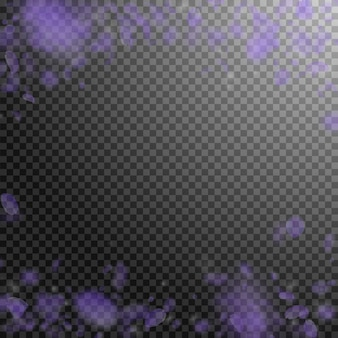 Pétales de fleurs violettes tombant. fleurs romantiques précieuses qui tombent de la pluie. pétale volant sur fond carré transparent. amour, notion de romance. belle invitation de mariage.