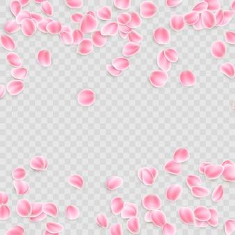 Pétales roses sur fond transparent. et comprend également