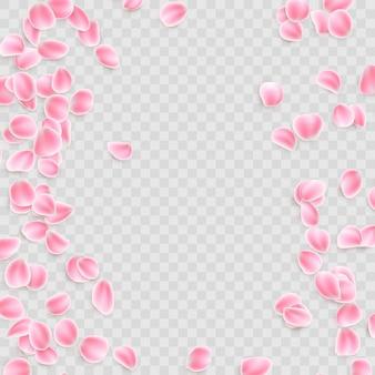 Pétales roses sur fond transparent.