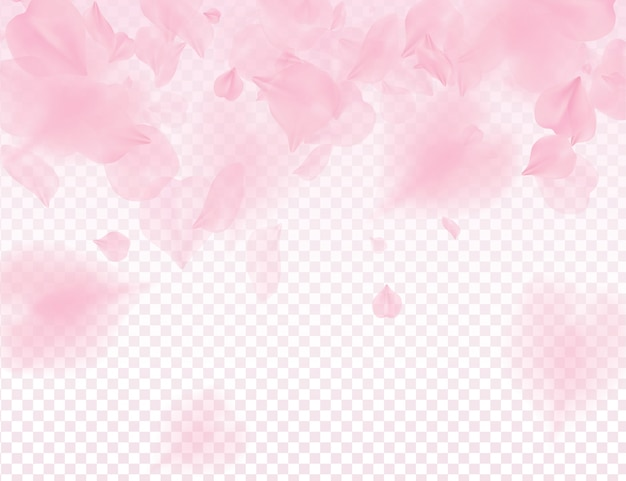 Pétales de sakura rose sur fond transparent.