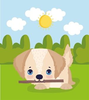 Petit chien avec bâton