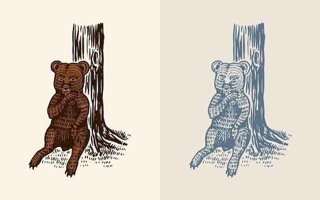Petit ours grizzli en animal sauvage de style vintage le gamin de la bête est assis à l'arbre et lèche le