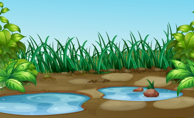 Petit point d'eau à natue