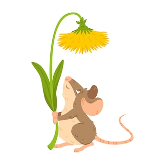 Petite souris de forêt tenant le pissenlit campagnol des prés avec fleur rat garder la fleur