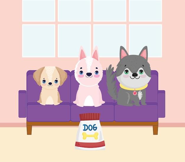 Petits chiens mignons sur le canapé