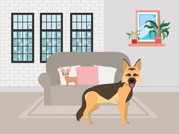 Petits chiens mignons dans le salon