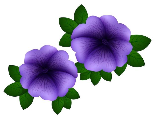 Pétunia de couleur violette