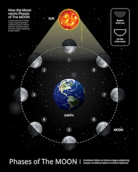 Phases de la lune vector illustration