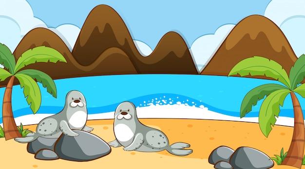 Phoques sur la plage