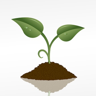 Photo d'une pousse verte dans une poignée de terre