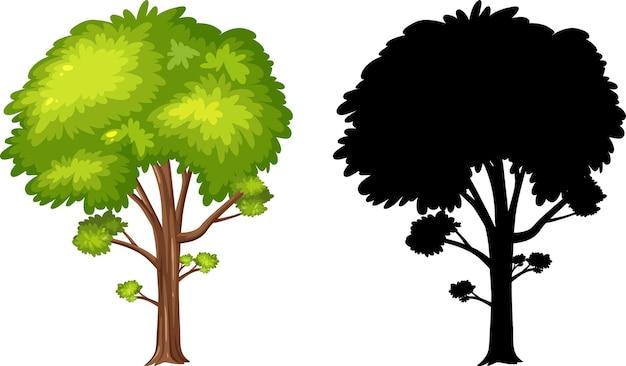 Photos de silhouette de grand arbre