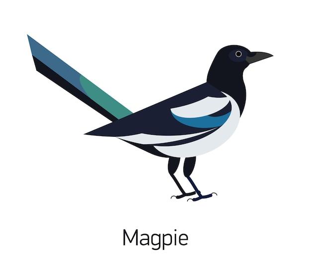 Pie isolé sur fond blanc. oiseau synanthrope intelligent au plumage noir et blanc. mignon corvidé sauvage intelligent, espèce aviaire. illustration vectorielle moderne dans un style géométrique plat tendance.