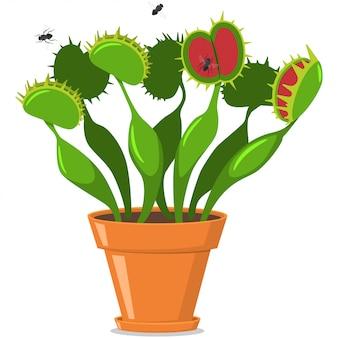 Piège à mouches vénus dans un pot
