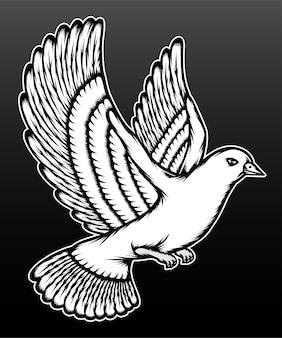 Pigeon blanc isolé sur noir