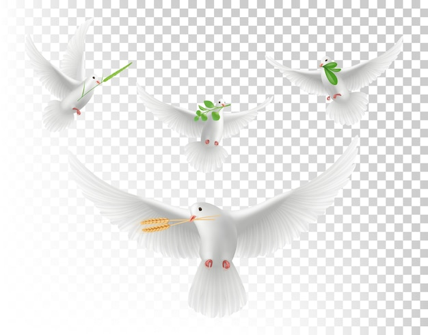 Pigeons réalistes avec des branches. ensemble isolé de colombes volantes blanches. illustration pigeon réaliste avec branche verte