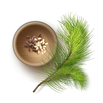 Pile réaliste de vecteur de noix de pin non décortiquées et décortiquées dans un bol en bois avec branche de cèdre bouchent la vue de dessus isolé sur fond blanc