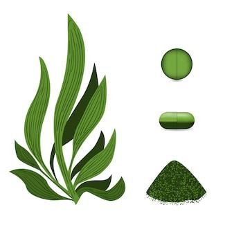 Pilules d'algues spiruline, poudre de spiruline.