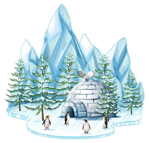 Pingouins et chouette par l'igloo