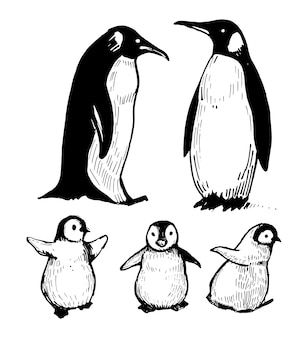Les pingouins. illustration dessinée à la main.
