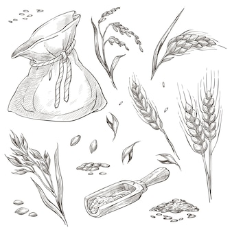 Piquets de blé ou d'orge, récoltés en sac