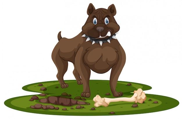 Un pitbull et un os