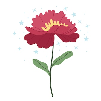 Pivoine rouge sur fond blanc.illustration simple.