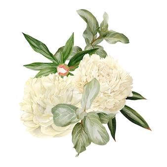 Pivoines blanches, feuilles et elaeagnus
