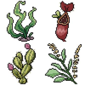 Pixel art mis isolé étrange plante