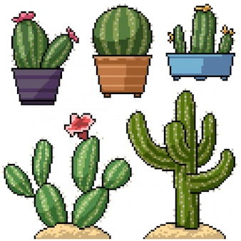 Pixel art set décoration de cactus isolé