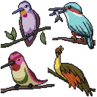 Pixel art set oiseau isolé sur branche