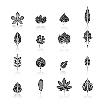 Plant leaves black icons set