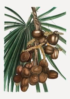 Plant de palmier dattier
