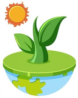 Plante en croissance hors du concept de globe